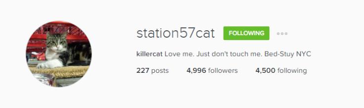 Insta_Killercat